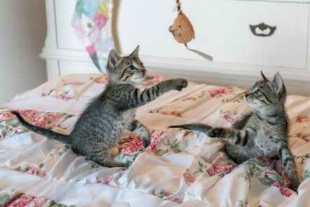 tabby kittens on floral comforter